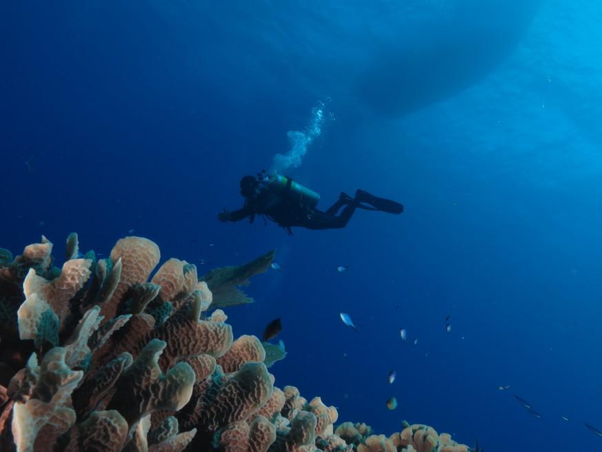 Padi Advanced Open Water Diver Course Scuba Diving Varadero
